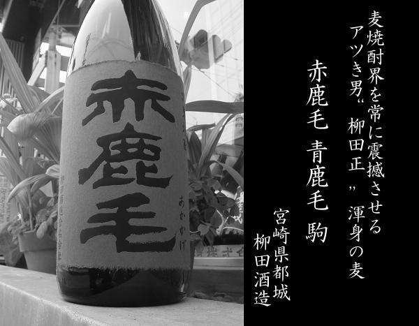 麦焼酎 青鹿毛 赤鹿毛 駒 柳田酒...